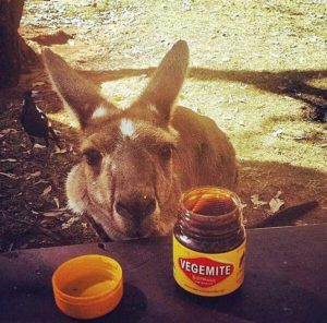 Magpie Kangaroo And Vegemite
