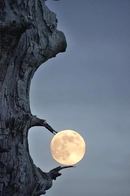 Brilliant Moon Shot!