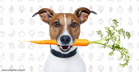 Never Feed Your Dog These Fruits and Veggies
