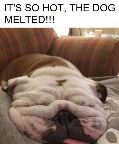 So Hot The Dog Melted