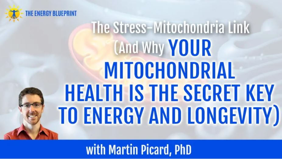 Why Your Mitochondrial Health Is The Secret Key To Energy And Longevity