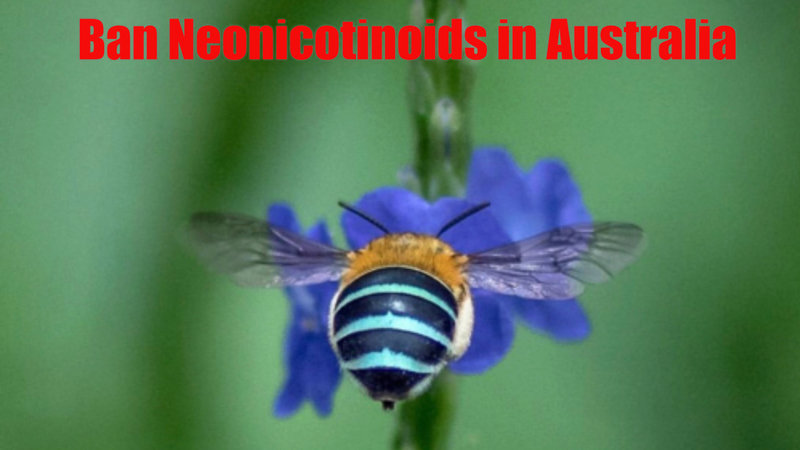 Please Sign This Petition to Ban Neonicotinoids in Australia