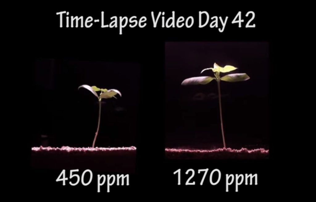 CO2 Increases Plant Growth