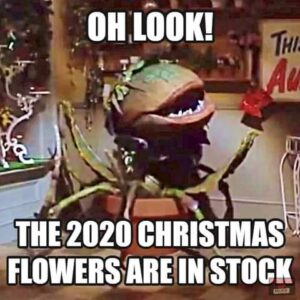 2020 Christmas Flowers