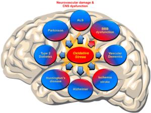 Neurovascular Damage