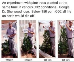 What Different Levels of CO2 Does to Plants