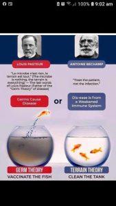 Germ vs Terrain Theories