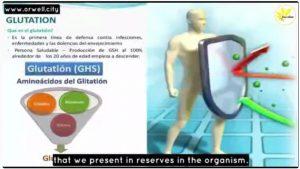 Glutathione Defense Against Free Radical Damage